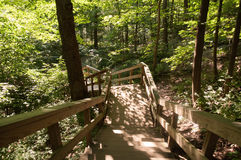 Wijący drewniany schody w drewnach Obraz Stock