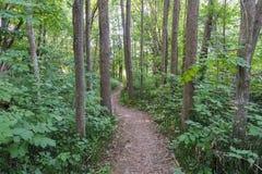 Wijący footpath przez zielonego lasu Fotografia Royalty Free