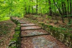 Wijący kamieni kroki z ulistnieniem horyzontalnym Obrazy Royalty Free