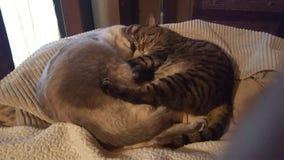 Wij houden van samen te knuffelen Stock Foto's