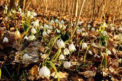 Wijd geopende nam wit bloem met details toe royalty-vrije stock fotografie