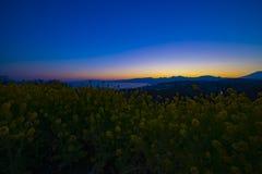 Wijd geschotene de bloemtuin van zonsondergangcanola stock afbeelding
