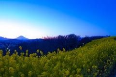 Wijd geschotene de bloemtuin van zonsondergangcanola royalty-vrije stock foto's