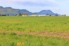 Wijd Open Grasrijke Landelijke Vallei stock fotografie