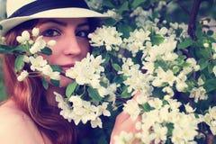 Wijfje in de bloem van de appelboom Stock Foto's