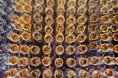 Wijn, champagne, cognacglazen Royalty-vrije Stock Afbeeldingen