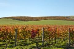 Wijn counrty Sonoma Royalty-vrije Stock Fotografie