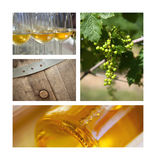 Wijn en wijnbouw stock foto's
