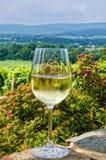 Wijn en wijngaard Stock Afbeelding
