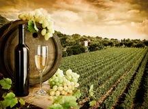 Wijn en wijngaard Stock Fotografie