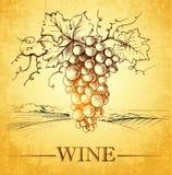 Wijn etiket met takdruiven, royalty-vrije illustratie