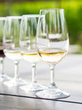 Wijn het proeven in Zuid-Afrika Royalty-vrije Stock Foto's