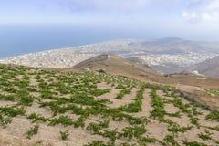 Wijn in Santorini met mening naar overzees, Griekenland wordt ingediend dat Royalty-vrije Stock Fotografie