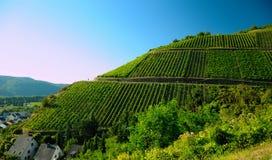 Wijnbars op de banken van de Moezel in Leutesdorf worden gevestigd die royalty-vrije stock fotografie