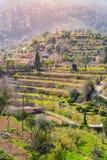Wijnbergen dicht bij Valldemossa (Majorca) Stock Foto's