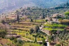 Wijnbergen dicht bij Valldemossa (Majorca) Royalty-vrije Stock Foto