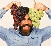 Wijnbouw en het tuinieren concept De mens met baard houdt druiven stock afbeelding
