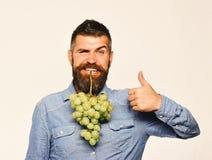 Wijnbouw en het tuinieren concept De mens met baard houdt groene druiven stock afbeeldingen