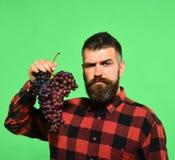 Wijnbouw en het tuinieren concept Winegrower met trots gezicht stelt druiven voor royalty-vrije stock foto