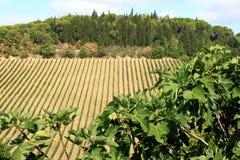 Wijnbouw in het gebied van Toscanië, Italië Stock Fotografie
