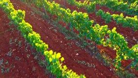 Wijnbouw in landelijk landschap stock videobeelden