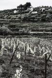 Wijnbouw in Portugal stock afbeeldingen