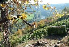 Wijnbouw in steil dorp op de riviervallei royalty-vrije stock afbeelding