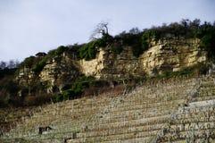 Wijnbouw in steile helling met het bedekken van rotsrij royalty-vrije stock foto's