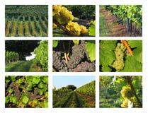 Wijnbouw/wijncollage royalty-vrije stock foto's