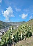 Wijndorp van ediger-Eller, de Vallei van Moezel, Duitsland royalty-vrije stock foto