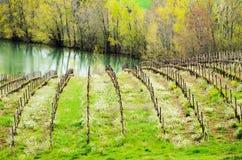 Wijngaard stock afbeelding