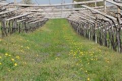 Wijngaard Royalty-vrije Stock Foto's