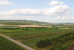 Wijngaard royalty-vrije stock afbeelding
