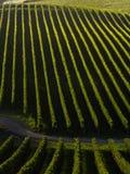 Wijngaard in Adelaide Hills Stock Fotografie