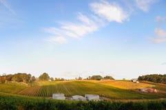 Wijngaard in Adelaide Hills Royalty-vrije Stock Afbeelding