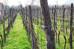 Wijngaard in Alazani-Vallei, Georgië Royalty-vrije Stock Fotografie