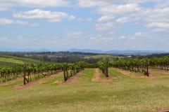 Wijngaard in Australië Royalty-vrije Stock Foto
