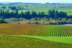 Wijngaard in Baai Hawkes Stock Fotografie