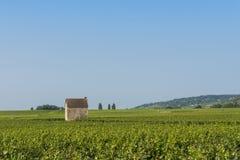 Wijngaard in Beaune Royalty-vrije Stock Foto