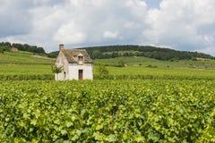 Wijngaard in Beaune Stock Afbeeldingen