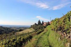 Wijngaard in Belvedere stock foto's