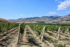 Wijngaard in bergen in de Krim royalty-vrije stock afbeeldingen