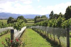 Wijngaard bij Baai Hawkes Royalty-vrije Stock Afbeeldingen