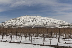 Wijngaard bij de voet van de berg in de winter Royalty-vrije Stock Afbeeldingen