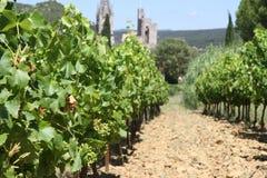 Wijngaard bij het dorp Aiguèze in de Provence, Frankrijk Stock Foto's