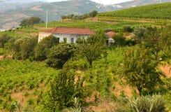 Wijngaard bij Peso DA Regua in Alto Douro Wine Region, Portugal Stock Afbeelding