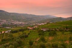 Wijngaard bij Peso DA Regua in Alto Douro Wine Region, Portugal Stock Fotografie