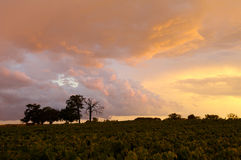 Wijngaard bij schemer Stock Foto