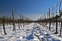 Wijngaard bij sneeuw Stock Fotografie