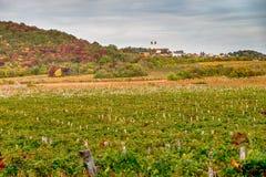 Wijngaard bij Tihany-dorp Royalty-vrije Stock Fotografie
